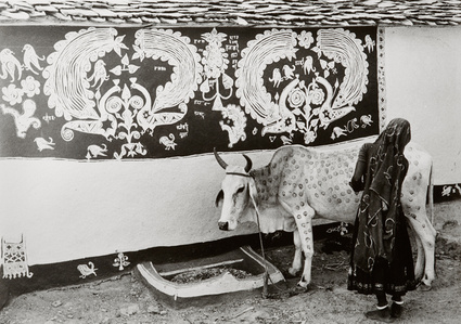 A Meena (tribal) woman decorating the bullock for 'Gordhan' festival, Rajasthan