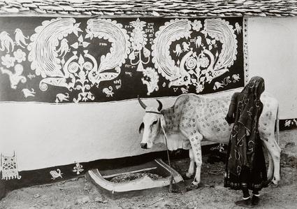 A Meena (tribal) woman decorating the bullock for 'Gordhan' festival, Rajasthan