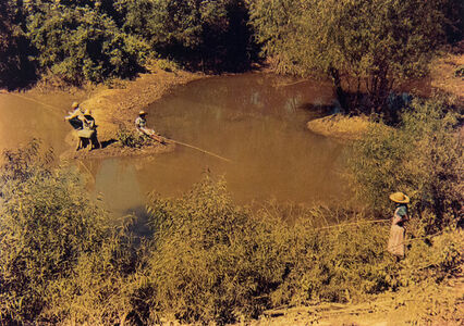 Negroes Fishing in Creek Near Cotton Plantations Outside Belzoni, Mississippi Delta