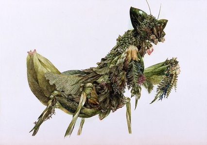 Grass Mantis