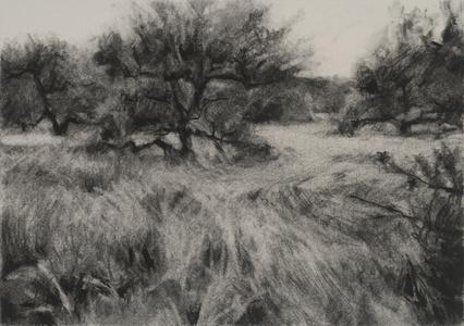 Orchard #9
