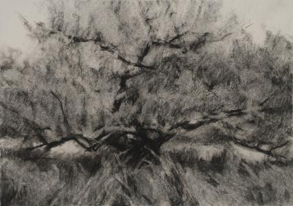 Orchard #10