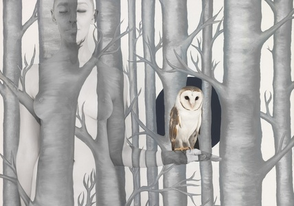 Owl in Woods III