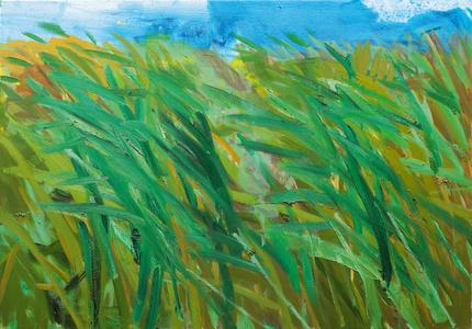 Schilf (Reeds)