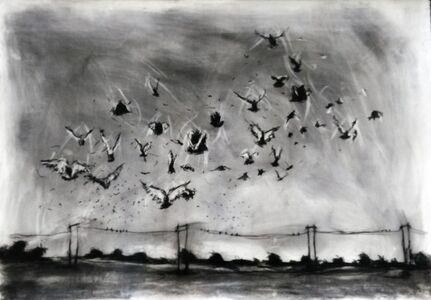 Amajuba - Birds