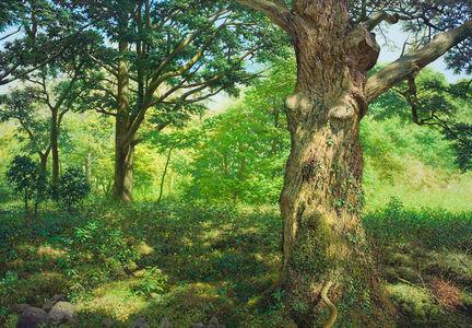 No78 Silent Woods