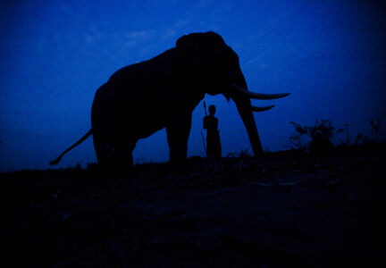 A portrait of a mahout and his elephant at their camp in Ayutthaya, Thailand.