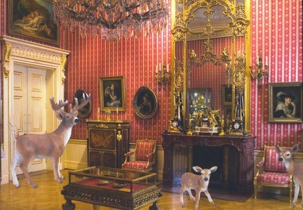 Deer In the Wallace Collection Study
