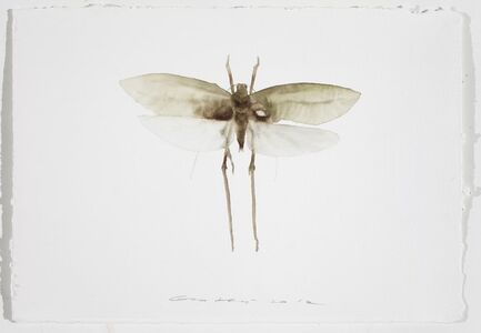 Painting is Collecting - Insect #7