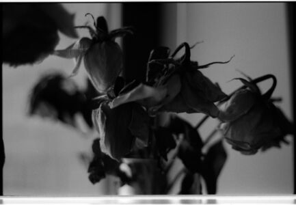 My Dead Roses