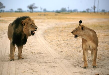 Cecil and his queen