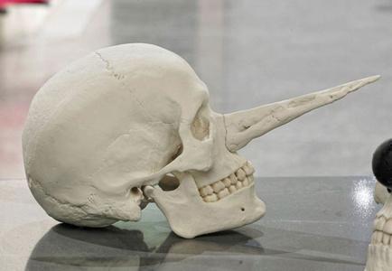 Cráneo de Pinoche Abogada