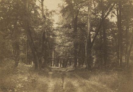 Bas-Bréau, Forest of Fontainebleau
