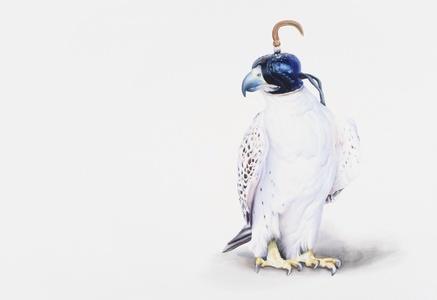 Hooded Hawk