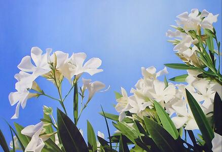 White Malibu 2
