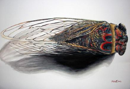 Urnes Cicada