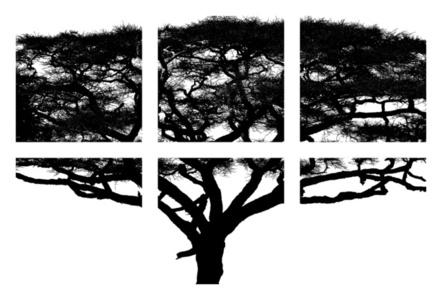 Umbrella Tree—Photo-Assemblage