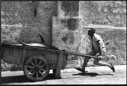 Tuna Fishing in Sicily