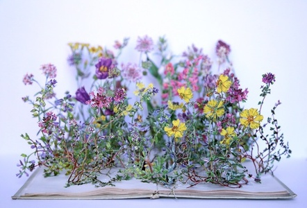Wild Flowers of the Chalk