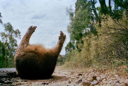Wombat # 2
