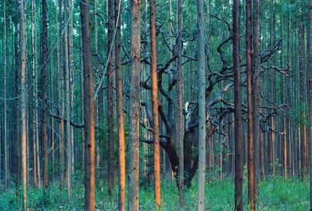 Sufocamento #23 da série madeira de lei