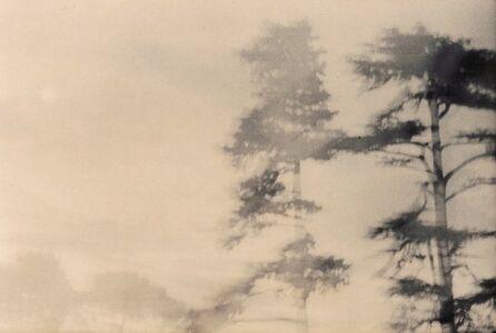 Au temps des arbres. été 2004