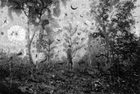 Fields of Sight: Scenes from Ganjad (in collaboration with Rajesh Vangad) Moonlight in the Forest