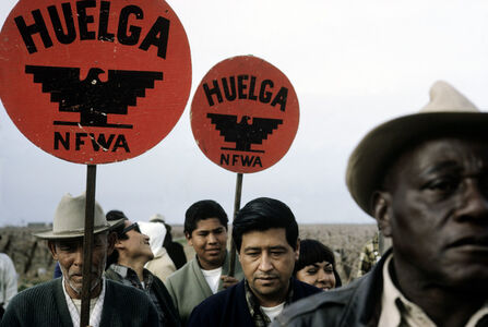 National Farm Workers Association (NFWA), picketing outside of a farm. California, USA.