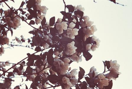 Fleur de printemps 1