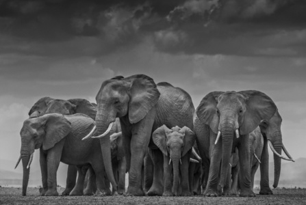 The Circle of Life II, Amboseli, Kenya