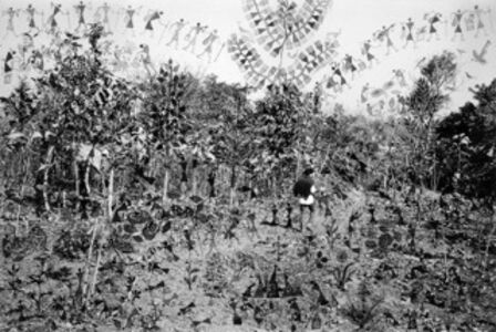 Fields of Sight: Scenes from Ganjad (in collaboration with Rajesh Vangad) Collecting Herbs in the Forest