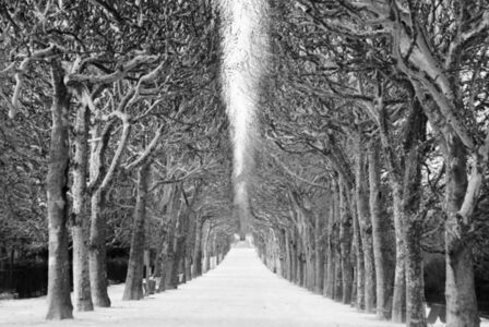Trees and Snow (from the Paris Cycle)