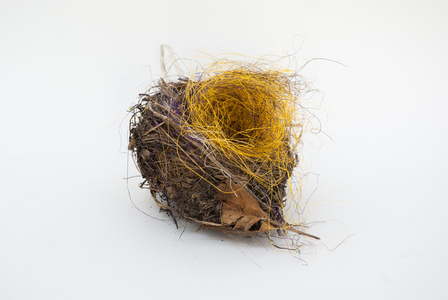 Untitled (zebra finch nest)