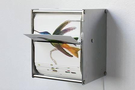 Ornithology I