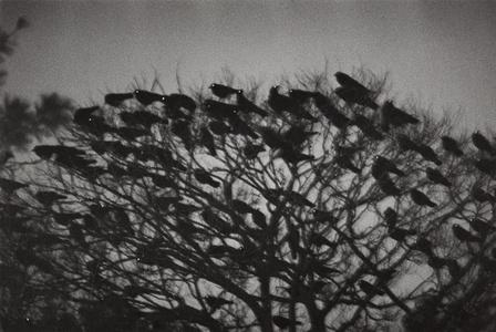 Kanazawa from Ravens
