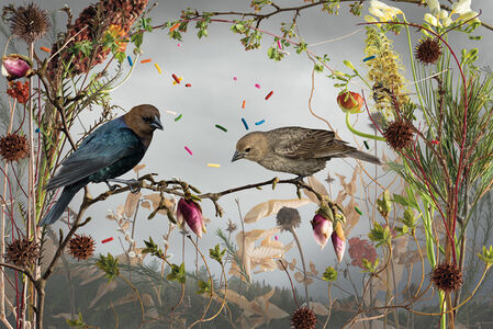 Cowbirds and Cake Sprinkles