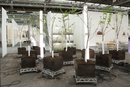 Tree of 40 Fruit Installation at the Armory Show 2011