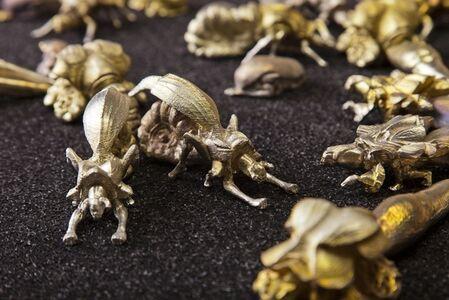 Swarm (Dauber wasp)