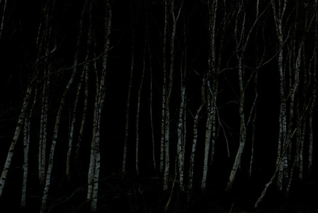 Black Woods#1