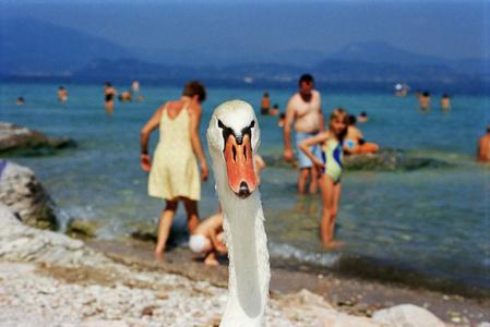Italy, Lake Garda, Series: Life's a Beach