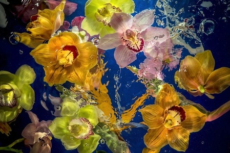 Aqua Flora no.004