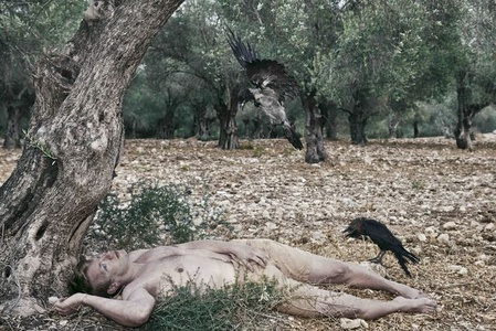 Man & Crows in The Olive Grove