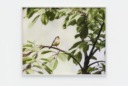 Bird - Landscape 2