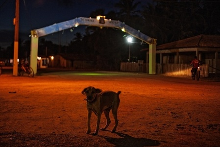 Cão errante no Jubim