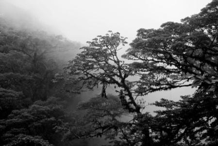 Reserva Biologica Bosque Nuboso Monteverde, Costa Rica Serie Estaciones