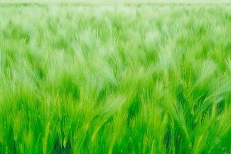 Spring Crop