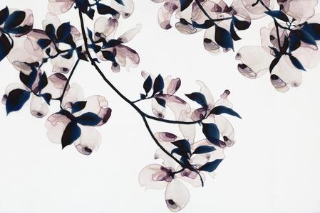 Ghost Blossom cs1