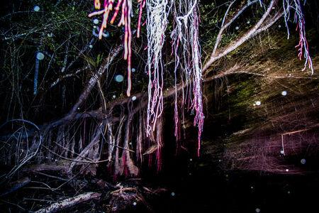 Bosque anfibio