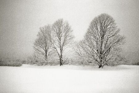 Three Lindens in a Snowstorm, East Hampton