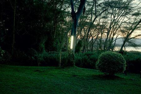 Garden tree light